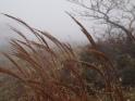 reeds?